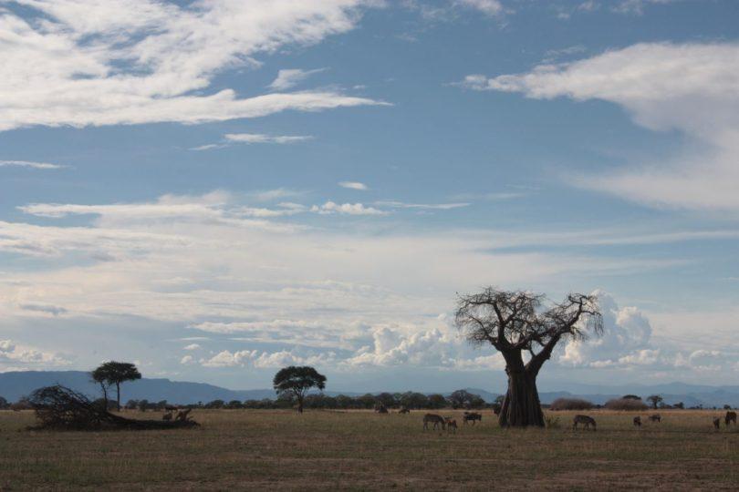 Organizar safari por tu cuenta
