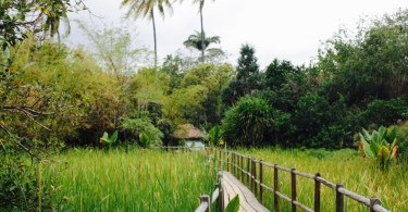 Jardín del Edén