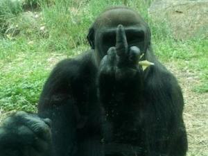Mono haciendo una higa