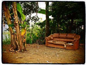 La jungle d'Or   kilomètres 17   Cambodge