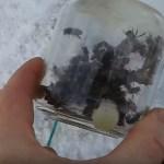Купить живых пчел зимой - Апитерапия в Киеве