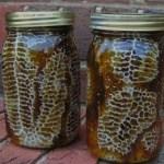 Начинающему пчеловоду Оценка работы пчеловода
