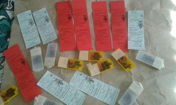 Купить пчеломатки оптом