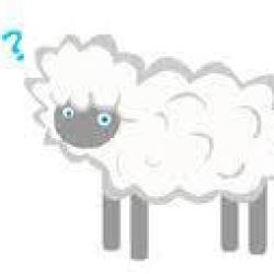 Confused sheep