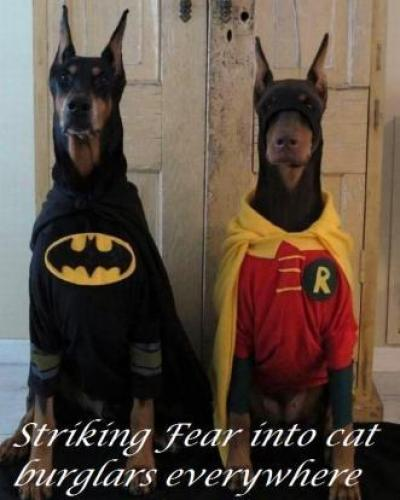 Doberman Superheros