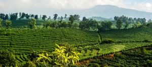 Cafea_de_Specialitate_Costa_Rica