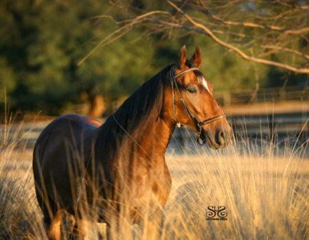 CASTIGADORA-StunningSteedsPhoto-StunningSteedsPhoto-3590