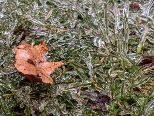 Even the grass becomes fragile with ice