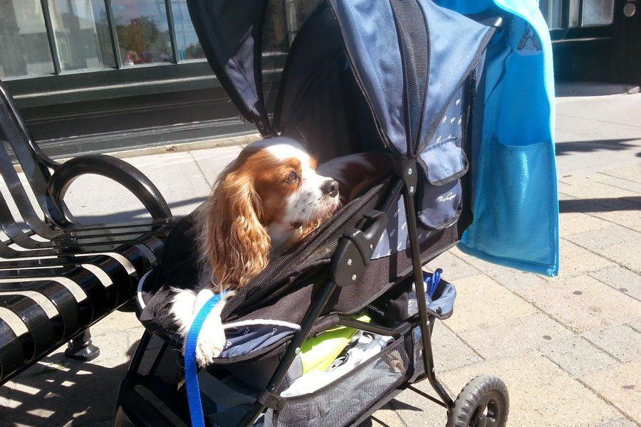 passeggino per cani: guida all'acquisto