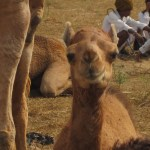Camel-palooza 2010: The Pushkar Camel Fair