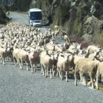 New Zealand Traffic Jam