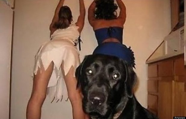 Un chien fan de striptease ?