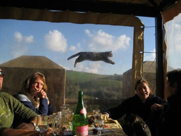 Le chat volant (normal).