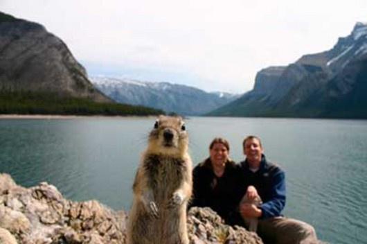 L'écureuil le plus connu au monde.