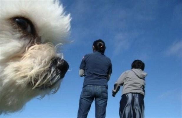 Le petit chien au regard mystérieux.
