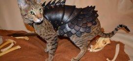Cette armure de combat pour chat aidera votre matou à faire la loi!
