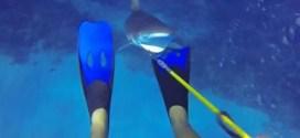 Vidéo : L'attaque d'un requin filmée par une GoPro