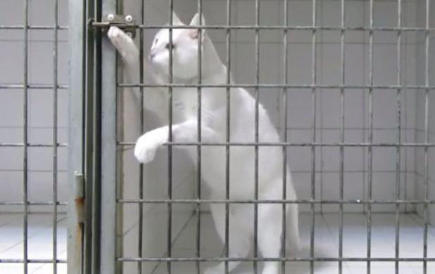 Vidéo : ce chat ultra malin se délivre d'une cage fermée