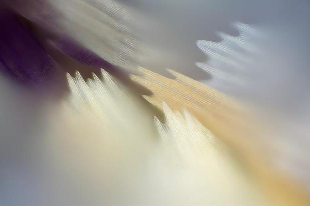 butterfly-wing-macro-photography-linden-gledhill-11