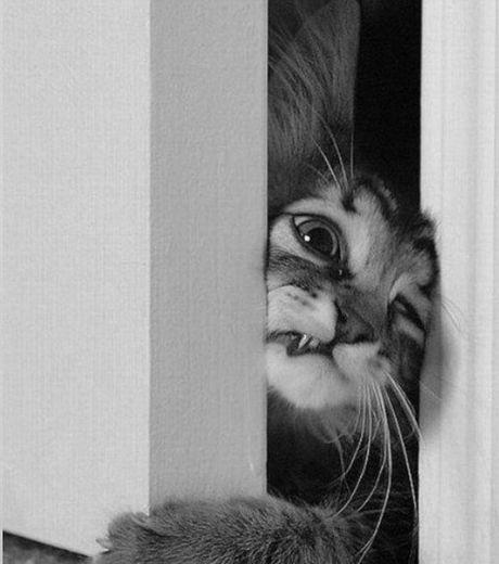 ce-chat-tente-desesperement-de-s-evader-en-se-glissant-dans-l-ouverture-de-la-porte_124503_w4601