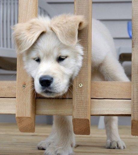 ce-chien-a-trop-joue-avec-le-feu-apres-avoir-voulu-passer-a-travers-cette-barriere-sa-tete-est-restee-coincee_124501_w460