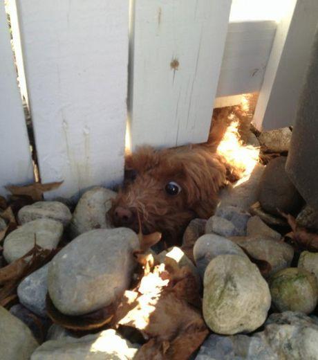 ce-chien-tente-de-passer-sous-une-barriere_124498_w460