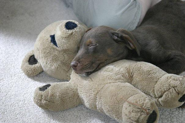 cute-animals-sleeping-stuffed-toys-8