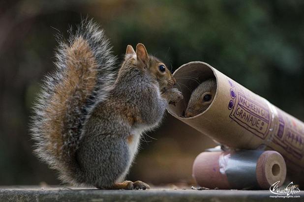 wildlife-photography-squirrels-max-ellis-11__880
