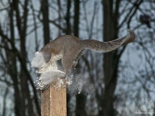 wildlife-photography-squirrels-max-ellis-4__880