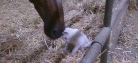 Zapping des animaux #7