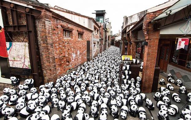 1600-Panda-11