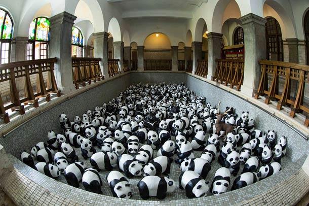 1600-Panda-3