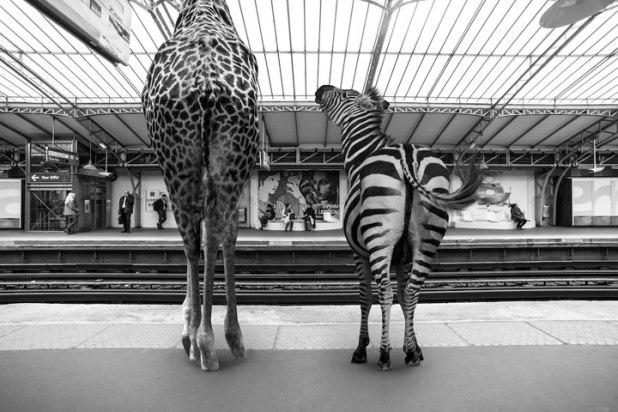 animaux-11