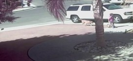 Vidéo : un chat défend un enfant attaqué par un chien