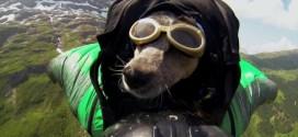 Vidéo : Whisper, premier chien à voler en wingsuit