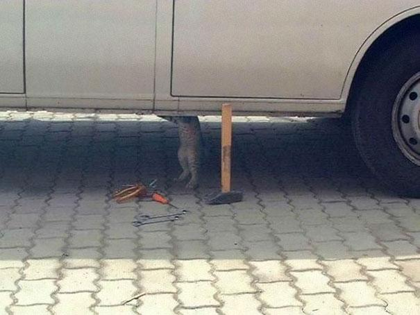 funny-animals-doing-human-things-61