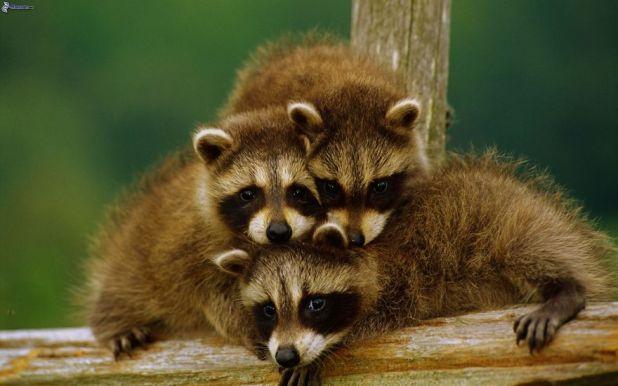 animal-family-portraits-54__880