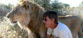 Vidéo. 11 ans d'amitié entre un homme et un lion