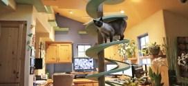 Vidéo. Une maison transformée en terrain de jeux pour chats