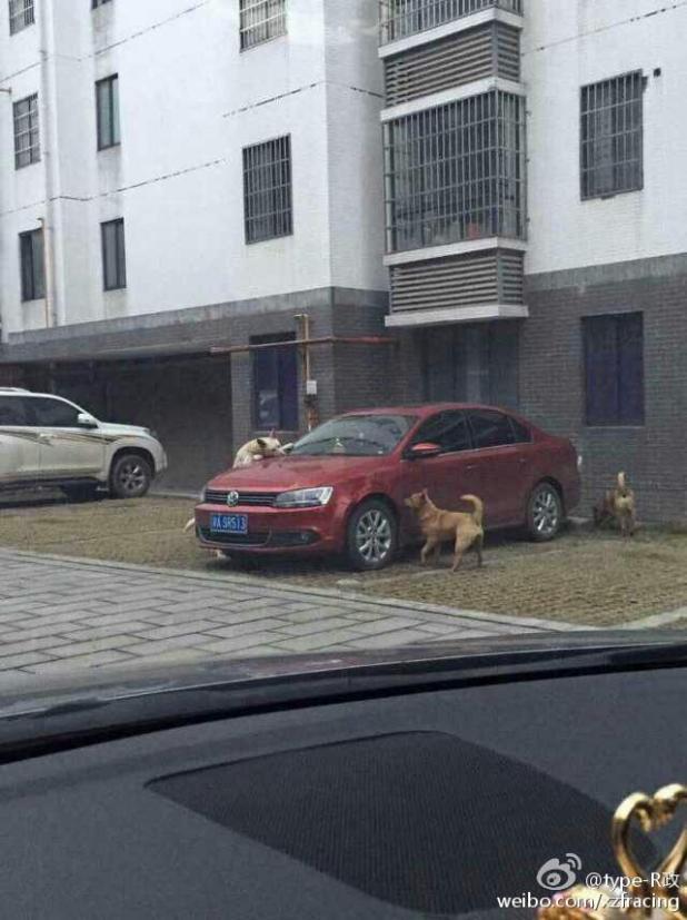 chiens-voiture-3