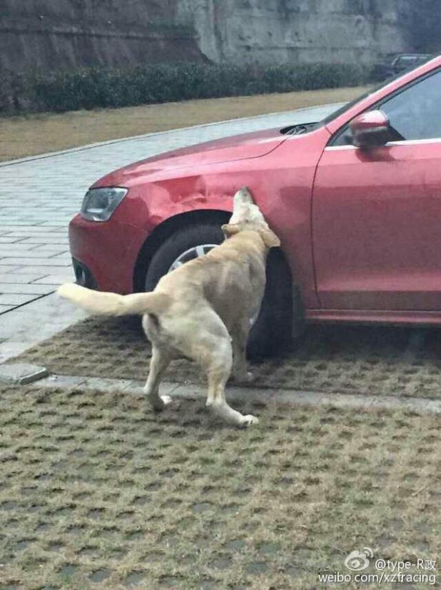 chiens-voiture-4
