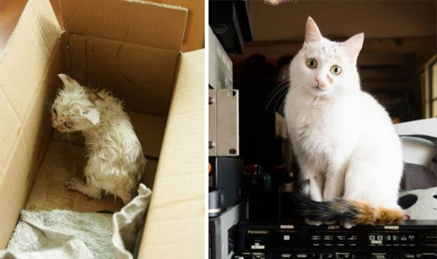 rescue-cat-abandoned-before-after-182__700