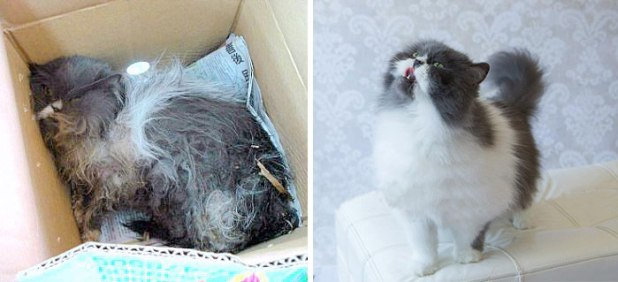 rescue-cat-abandoned-before-after-24__700