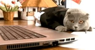 Un chat nommé à la tête d'une entreprise (vidéo)