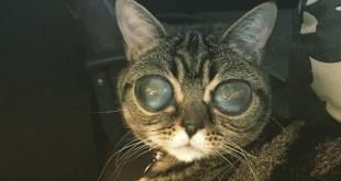 Matilda, la chatte aux yeux d'alien qui affole le web