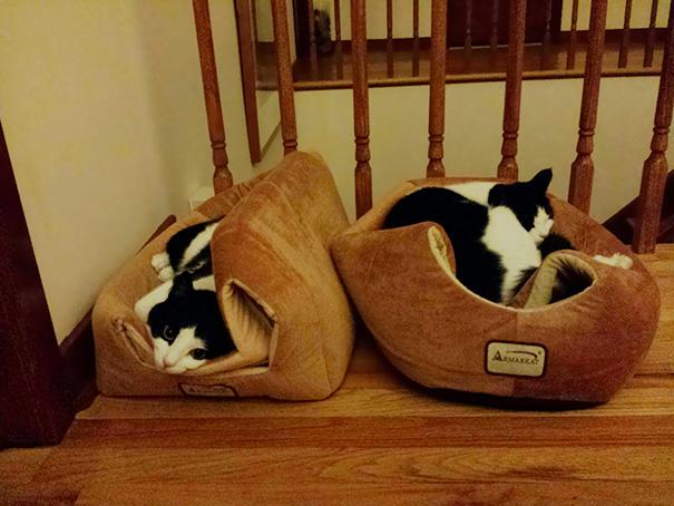 funny-cat-logic-32__605