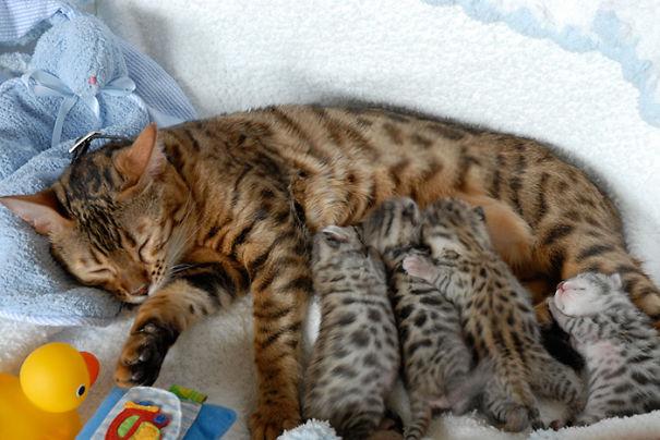 proud-cat-mommies-241__605