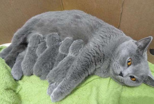 proud-cat-mommies-51__605