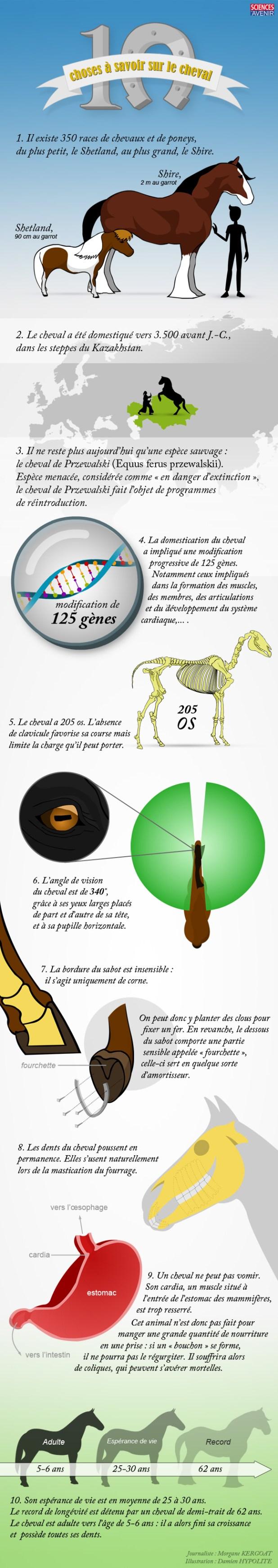 INFOGRAPHIE. 10 choses à savoir sur le cheval