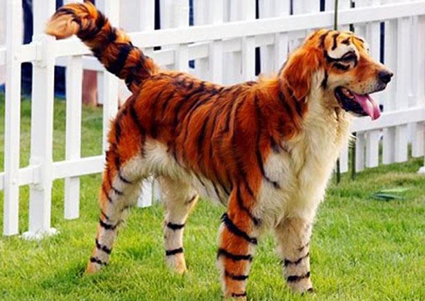 chien-tigre